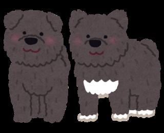 dog_karafutoken_taro_jiro.png